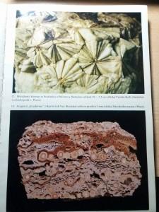 Mineralogie Československa Bernard